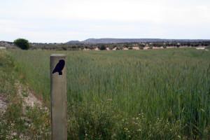 ruta ornitológica Ontígola (3)